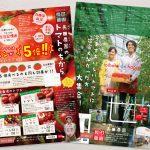 産直トマトの価値を伝えるチラシデザイン